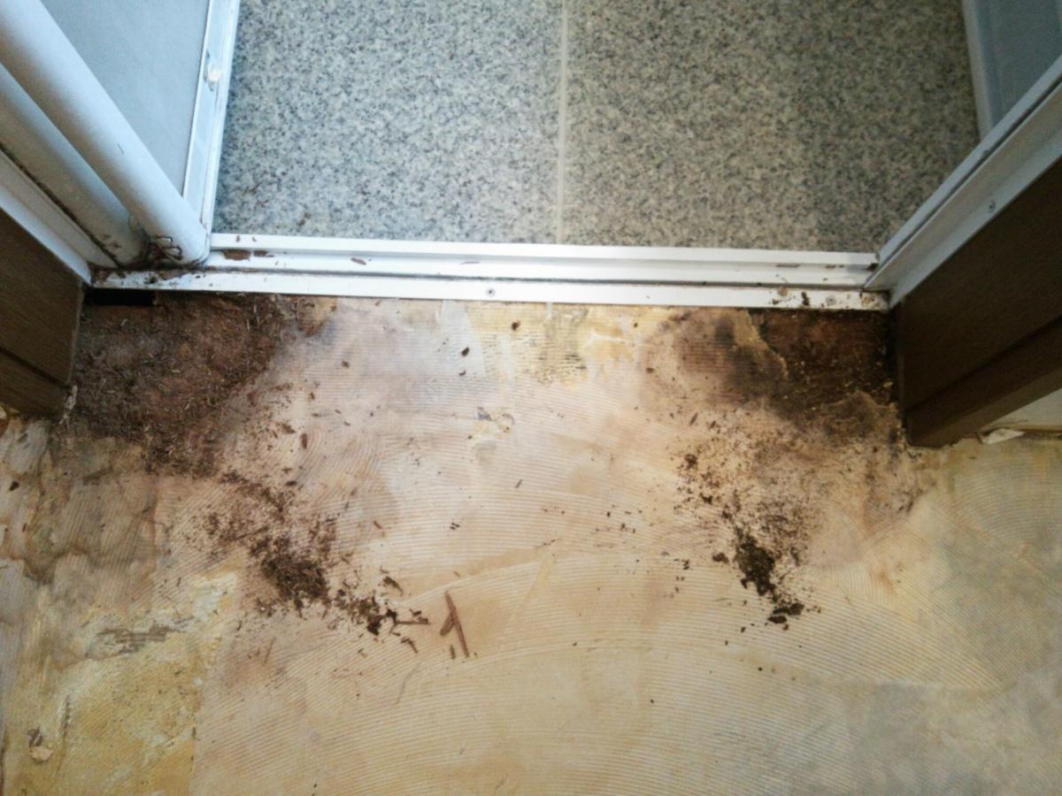 脱衣室床腐食-CF剥がし後